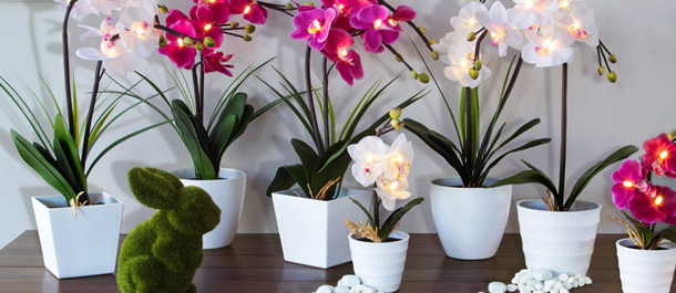 Light-Up LED Orchid Pots