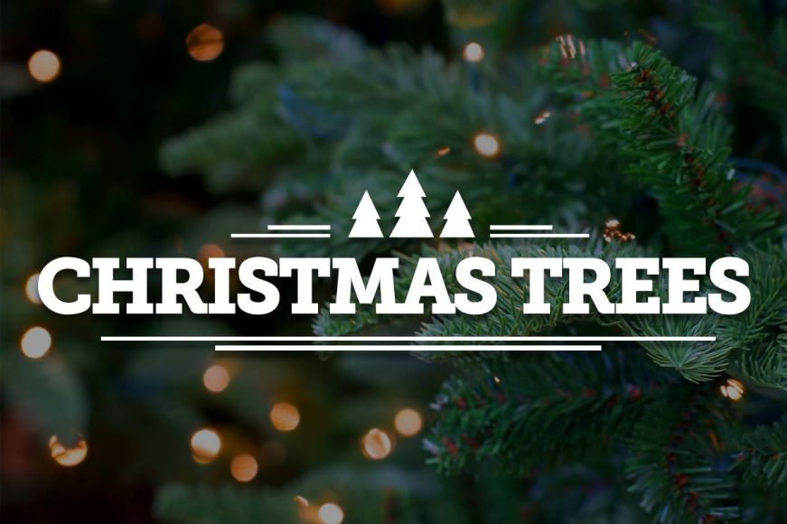 Christmas Trees For Every Home