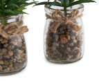 Set Of 2 6x12cm Leafy Succulents In Glass Jar 5