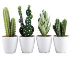 Set Of 4 7x23cm Cactus Succulents In Glass Jar 1