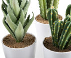 Set Of 4 7x23cm Cactus Succulents In Glass Jar 6