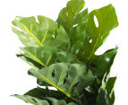 Cooper & Co. Artificial 45cm Monstera Plant - Green 5