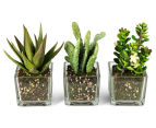 Set of 3 Artificial 16x7cm Succulents in Glass Vase - Green 2