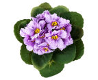 Set of 3 Artificial 21cm African Violets in Tin Pot - Purple 3
