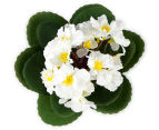 Set of 3 Artificial 21cm African Violets in Tin Pot - White 3
