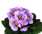 Set of 3 Artificial 21cm African Violets in Tin Pot - Purple 4