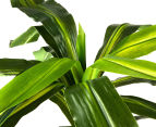 Artificial 58cm Potted Dracaena Janet Craig - Green 4