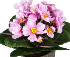 Set of 3 Artificial 21cm African Violets in Tin Pot - Pink 5