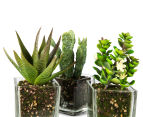 Set of 3 Artificial 16x7cm Succulents in Glass Vase - Green 6